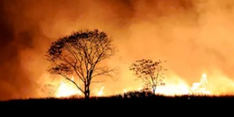 A bushfire raging in the distance, with two trees silhoutted against a background of fire
