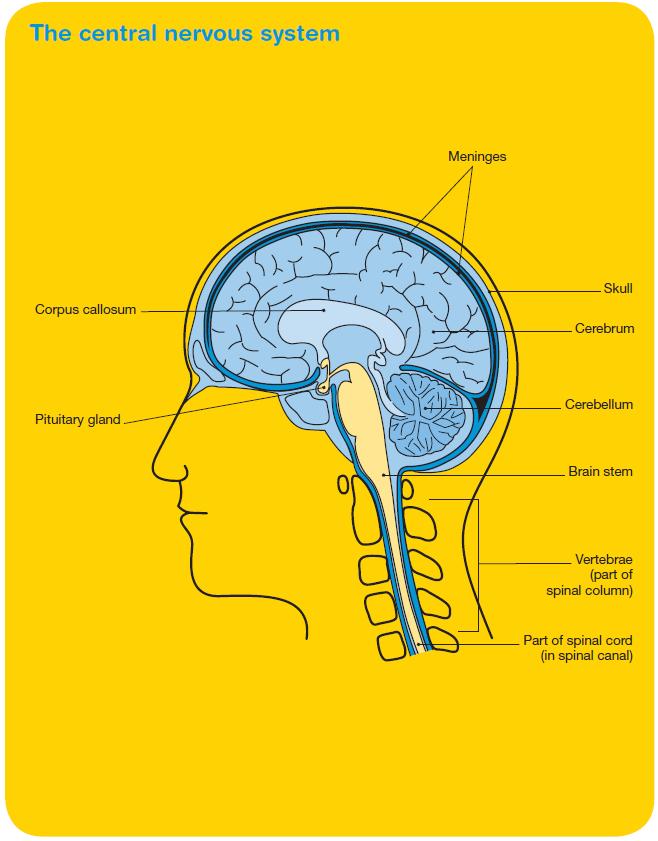 Brain Tumours Image 1